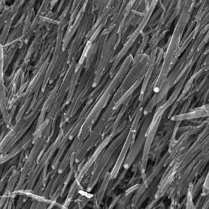 carbon_nanotubes